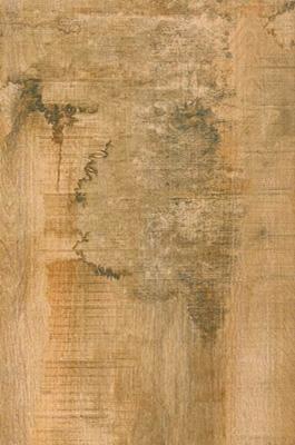 御木——古木风华